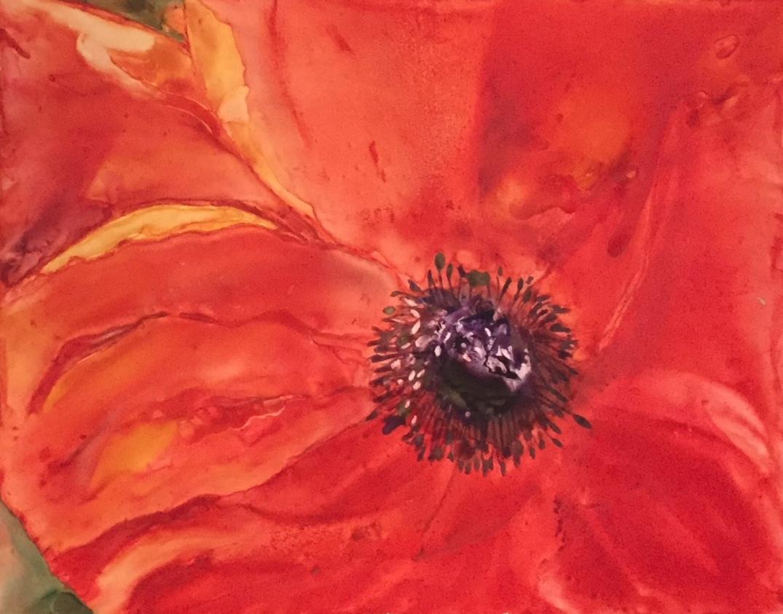 poppy32017